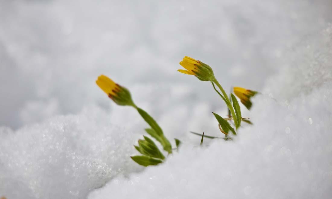 snow-3190867_1100
